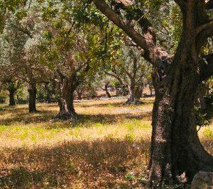 Holzuhren und Sonnenbrillen aus Olive